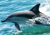 Dolphin watch cruises and tours, Nelson Bay NSW Australia.